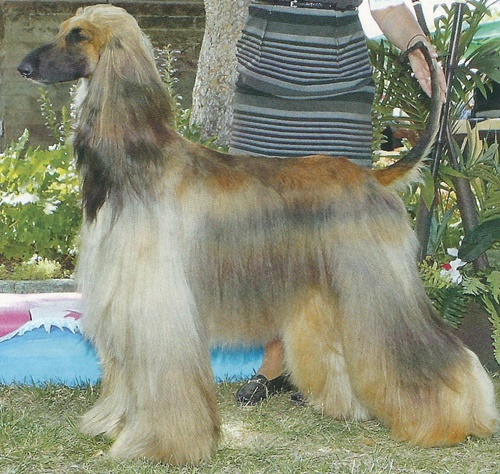 Canadian Professional Pet Stylists The Only Federally
