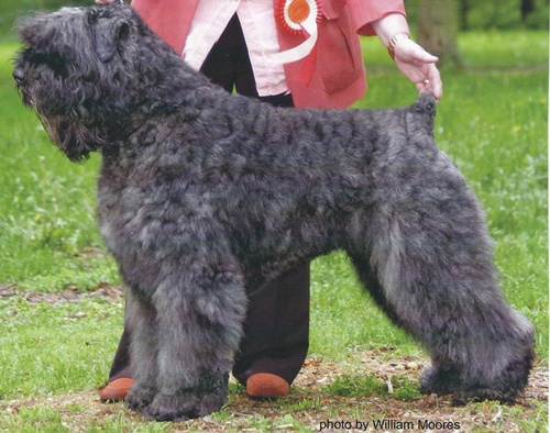 how to become a dog groomer canada