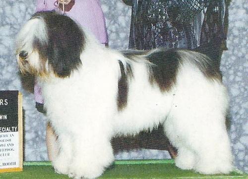 dogging norway polish  escort